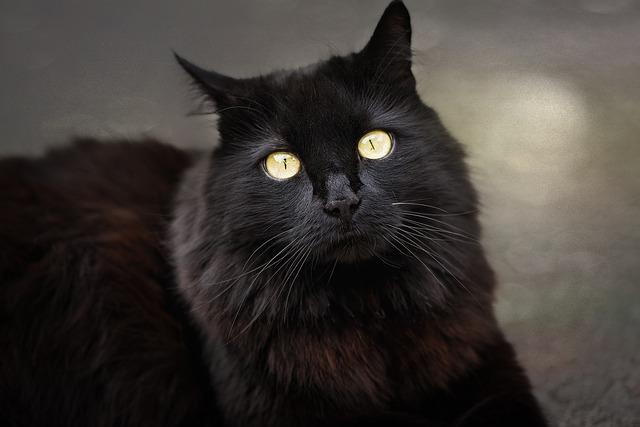 Cara Merawat Kucing Anggora Gambar Kucing Anggora Paling