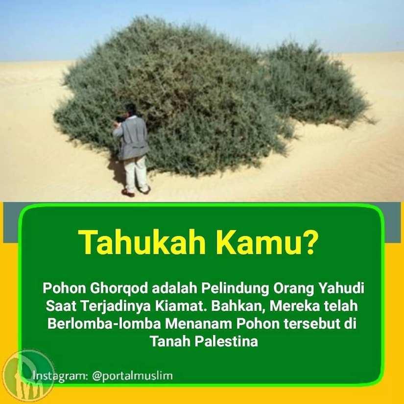 Seperti apa Pohon Ghorqod