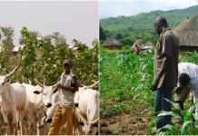 Fulani Herder: Farmers in Oyo raise alarm over attacks