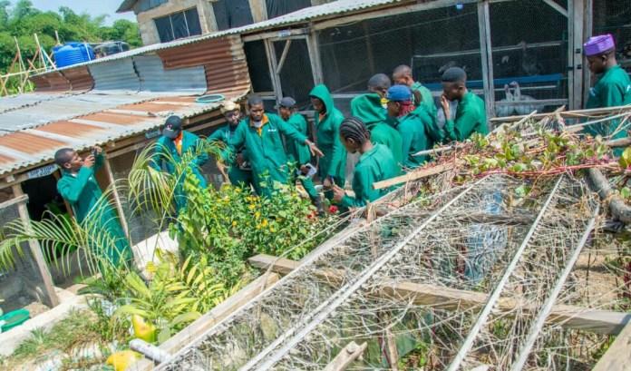 Nigeria's 2Baba unveils agribusiness project, Innobia