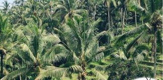 NIHORT inaugurates plantain, banana platform in Edo