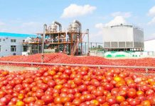 N20bn tomato processing factory in Kebbi completed - GBfoods