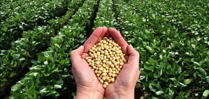 Beans Export: Agric Quarantine, CAN move to control pesticides application