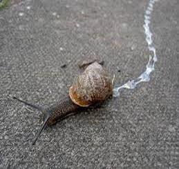 snail slime value chain