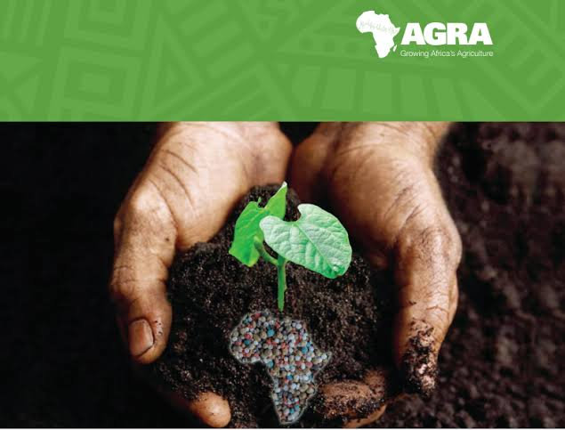 Plant nutrient deficiencies: AGRA identifies balanced fertiliser blends