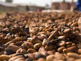 Nigeria exported 2,233 containers of Cocoa bean in 8 months