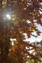 Herbstauswahl_05