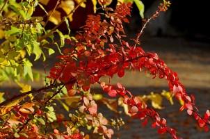 Herbstauswahl_07