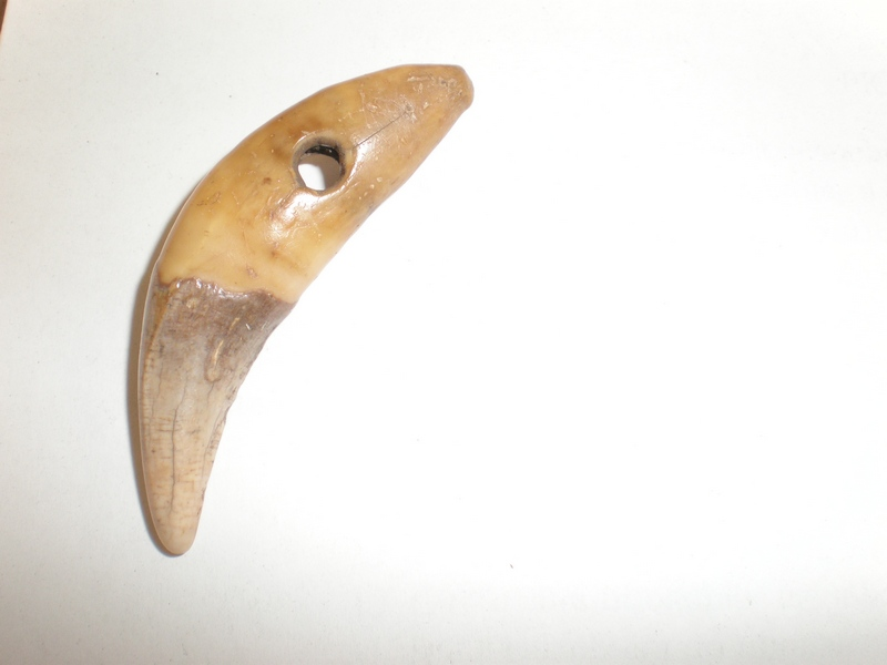 амулет из медвежьего клыка