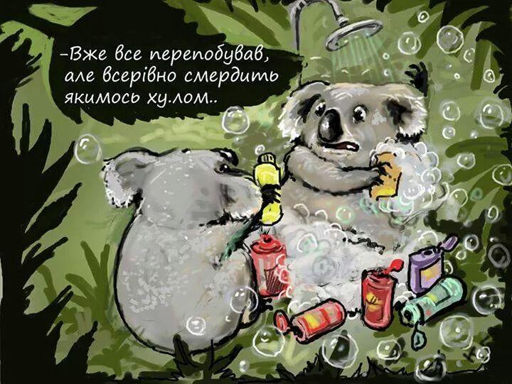 koaly_putin
