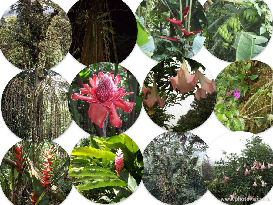 Costa Rica Plants