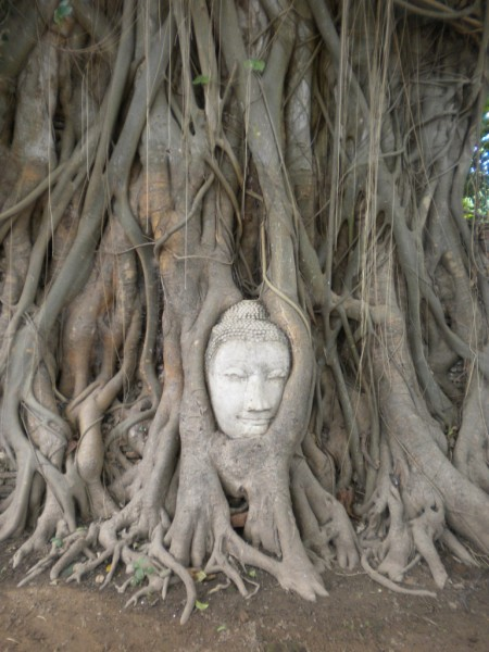 2mahathat buddha head
