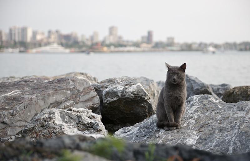Турция. Стамбульские коты