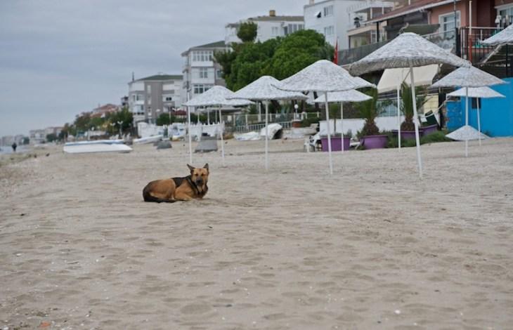 Турция. Стамбульские собаки