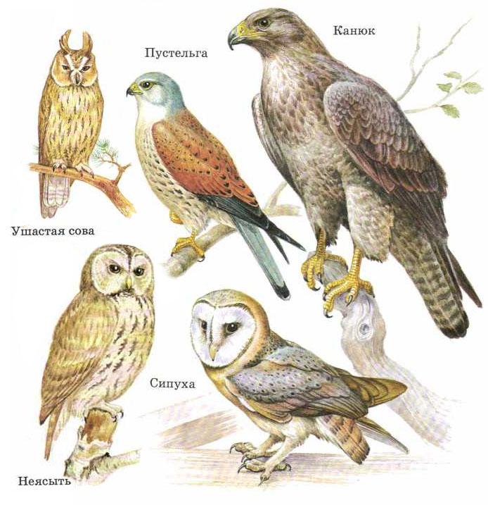 Картинка хищные птицы для детей