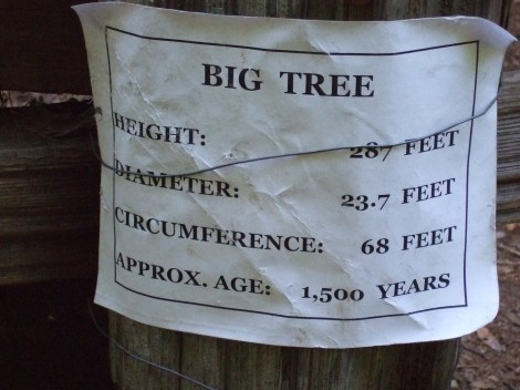 "Info about the ""Big Tree"""