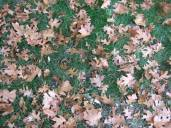 Photo of green grass and brown leaves