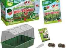 juegos ecológicos miniinvernadero sembrar sandia