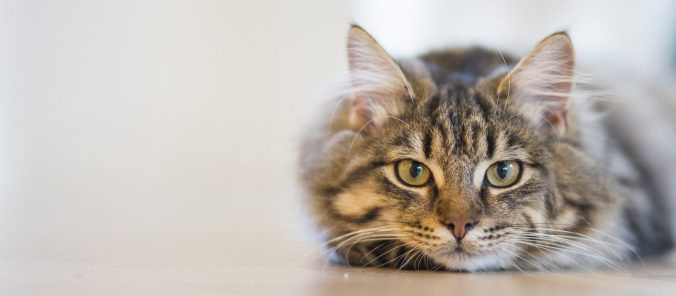 International Cat Care | The ultimate resource on feline health and welfare