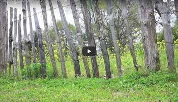 Video: Birds Singing in the Early Morning - Keith Dotson