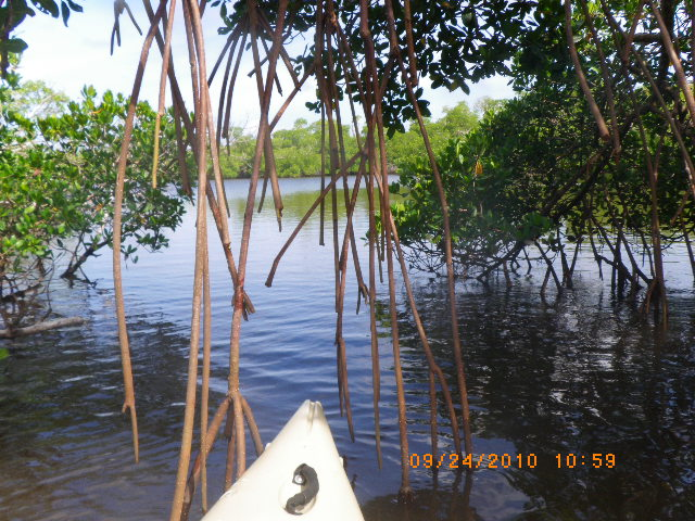 Everglades Eco-tours and photography tours