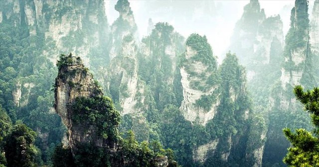 The most beautiful forests in the world - 5