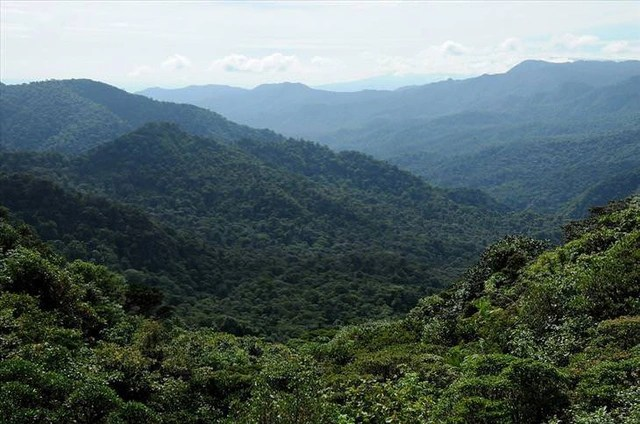 The most beautiful forests in the world - 6