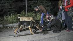 CHP'li Çankaya Belediyesi barınaktaki köpekleri ölüme terk etmeye çalıştı