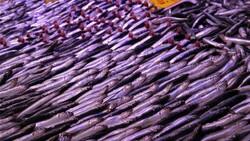 Eskişehir'de tezgahtaki balıklar soğuk havaları bekliyor