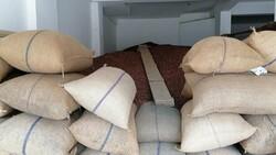 Giresun'da fındık fiyatı haftayı 24,5 liradan kapattı