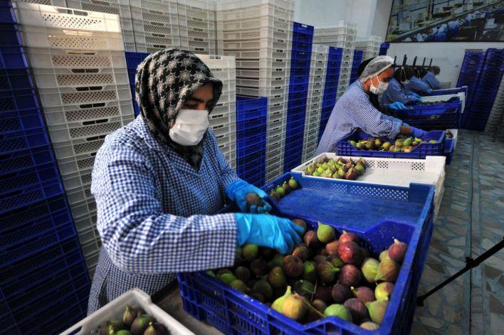bursa siyahi inciri dunya pazarina ihrac ediliyor 66977