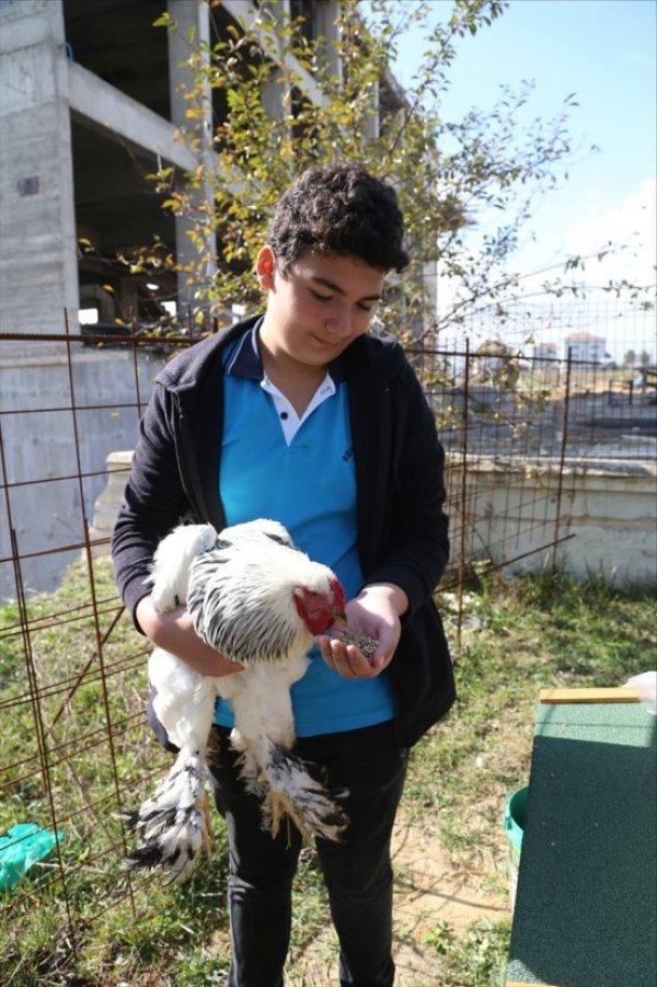 Tavuklarından ayrı kalamayınca okulda kümes yapıldı