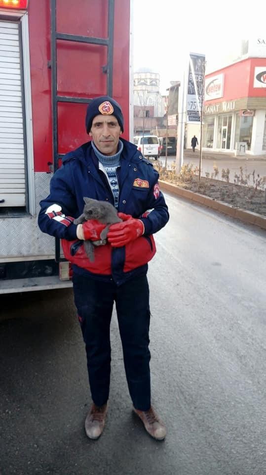 Ağrı'da kedi kurtarma operasyonu