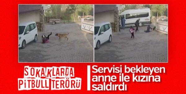 Pitbul saldırısına uğrayan çocuk güçlükle kurtarıldı