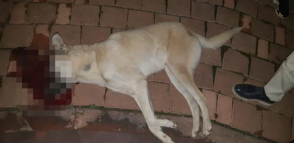Oğlunu ısıran köpeği öldüren baba tutuklandı