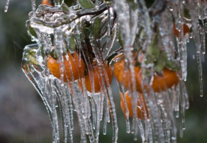 What is agricultural frost #1