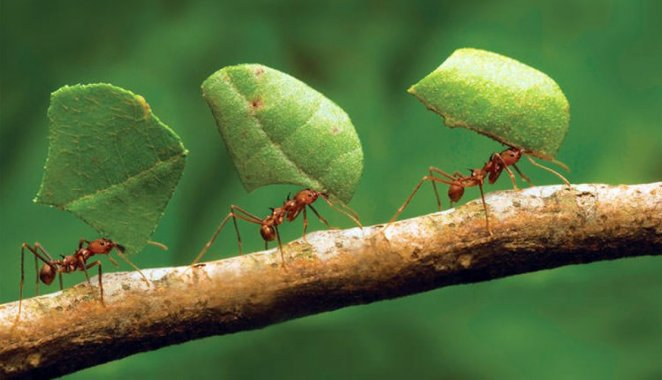 What is the ant prayer, why is it read?  Is there a prayer called the ant prayer?  Ant prayer recitation and meaning #2