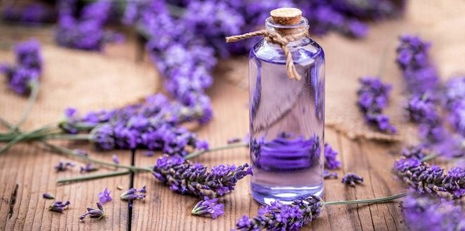 It is sold for 800 lira per liter: Benefits of lavender oil #2