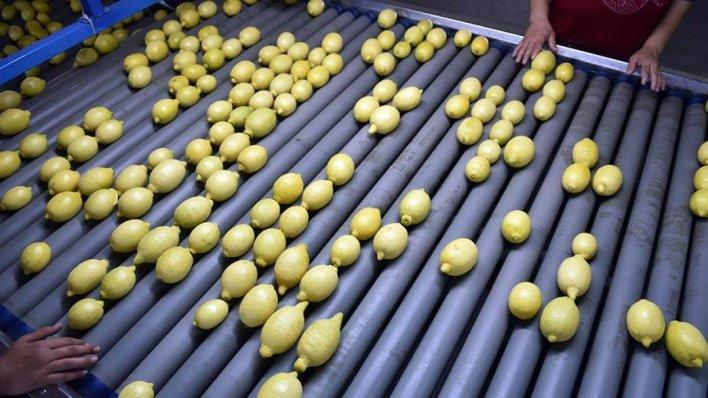 limon 5042