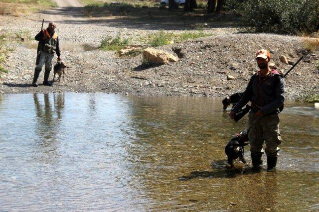 Sivas'ta domuzlar tarlaları talan etti, avcılar nöbet tuttu #6