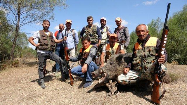 Sivas'ta domuzlar tarlaları talan etti, avcılar nöbet tuttu #11