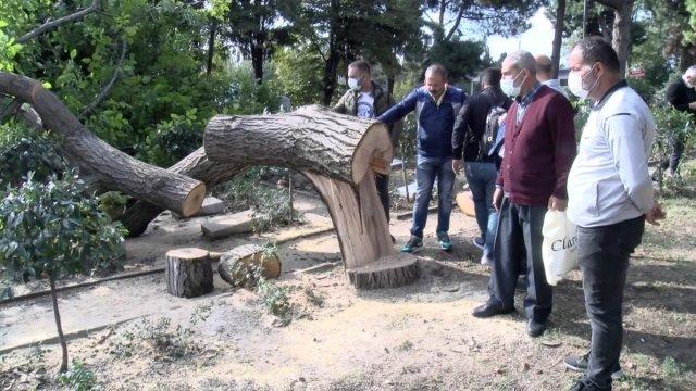 Edirnekapı Şehitliği'ndeki ağaç kesimi tepki topladı #8