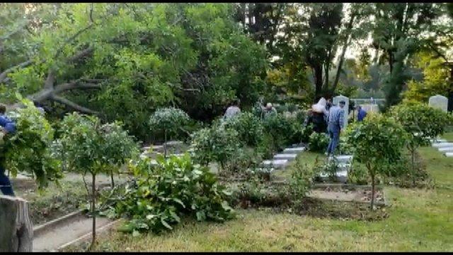 Edirnekapı Şehitliği'ndeki ağaç kesimi tepki topladı #4