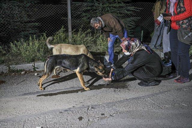 CHP li Çankaya Belediyesi barınaktaki köpekleri ölüme terk etmeye çalıştı #5