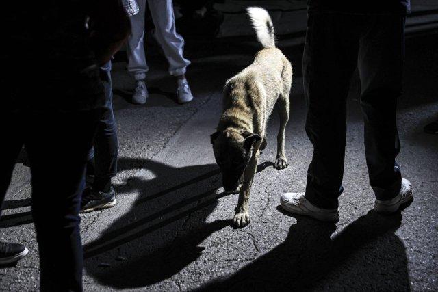 CHP li Çankaya Belediyesi barınaktaki köpekleri ölüme terk etmeye çalıştı #7