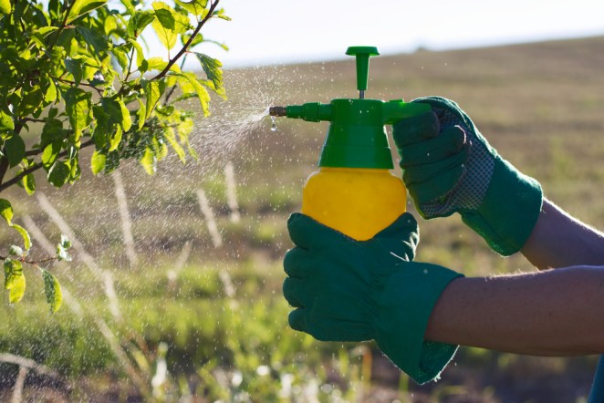 Pesticides increase breast cancer risk by 9 times #2