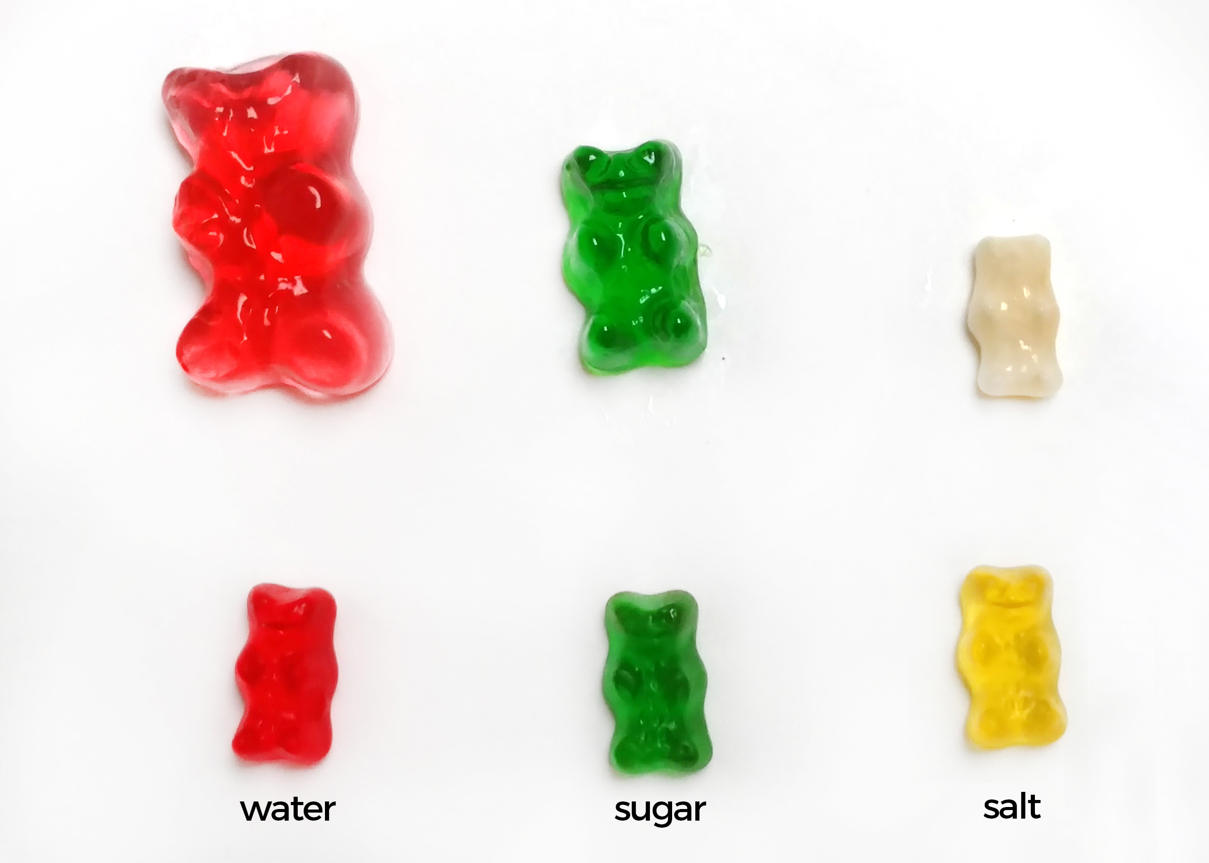 Gummy Bear In Salt Water The Effects Of Salt Water On