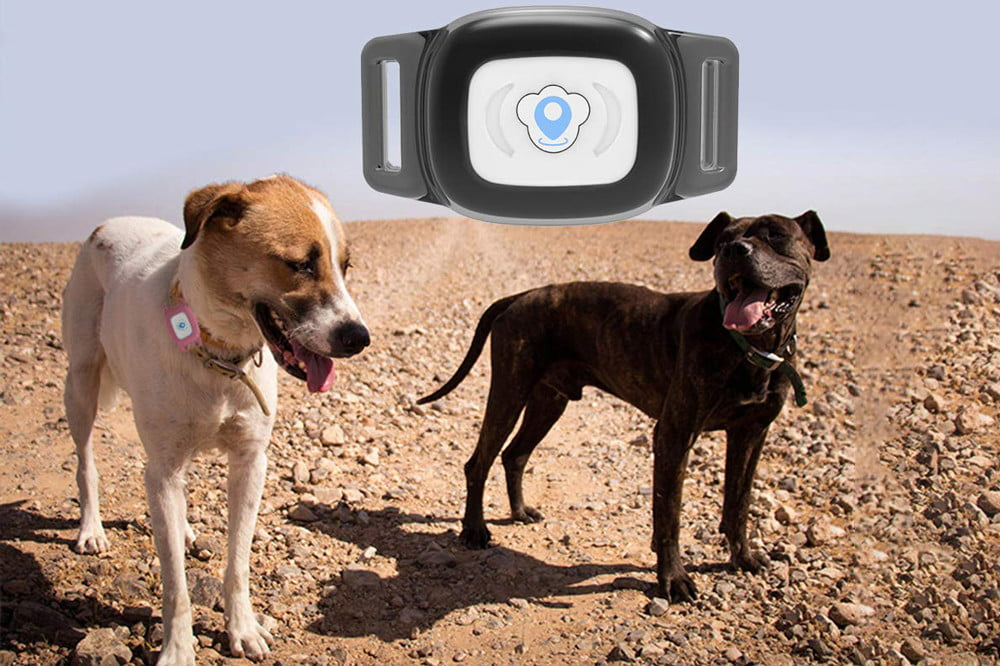 The Best Pet Trackers For Your Furry Friends Digital Trends