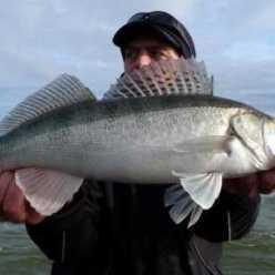 Калининградский залив: ловля судака