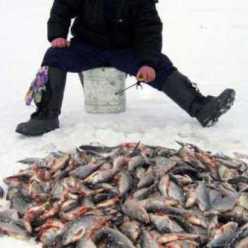 Рыбалка в Чайковском (Пермский край). Прогноз клева и рыбные места